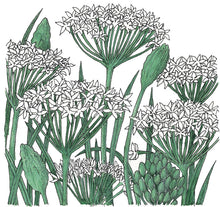 Load image into Gallery viewer, Organic Chives, Garlic