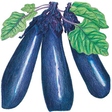 Load image into Gallery viewer, Organic Eggplant, Purple Long