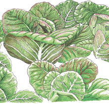 Load image into Gallery viewer, Organic Lettuce, Rouge D'Hiver