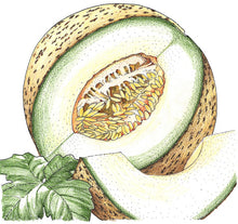Load image into Gallery viewer, Organic Melon, Rocky Ford Green