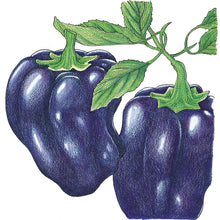 Load image into Gallery viewer, Organic Pepper, Sweet Purple Beauty