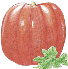 Load image into Gallery viewer, Organic Pumpkin, Big Max