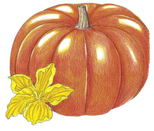 Load image into Gallery viewer, Organic Pumpkin, Cinderella
