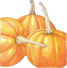 Load image into Gallery viewer, Organic Pumpkin, Small Sugar