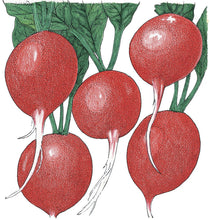 Load image into Gallery viewer, Organic Radish, Cherry Belle