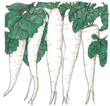 Load image into Gallery viewer, Organic Radish, White Icicle