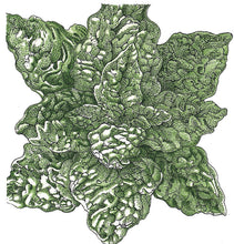 Load image into Gallery viewer, Organic Spinach, Bloomsdale