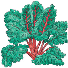 Load image into Gallery viewer, Organic Chard, Red Ruby-drawing