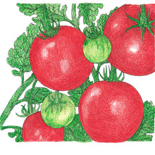 Load image into Gallery viewer, Organic Tomato, Stupice-drawing