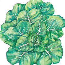Load image into Gallery viewer, Organic Lettuce, Summer Bibb