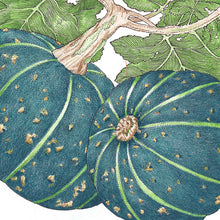 Load image into Gallery viewer, Organic Squash, Winter Buttercup