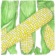 Load image into Gallery viewer, Organic Corn, Double Standard