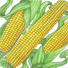 Load image into Gallery viewer, Organic Corn, True Gold