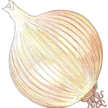 Load image into Gallery viewer, Organic Onion, Valencia