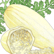 Load image into Gallery viewer, Organic Squash, Winter Spaghetti