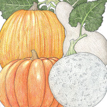 Load image into Gallery viewer, Organic Pumpkin, Fall Rainbow Mix
