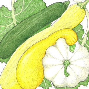 Organic Squash, Summer Melody Mix