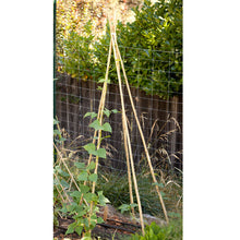 Load image into Gallery viewer, Bamboo Stakes - 7' (Pack of 10)