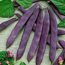 Load image into Gallery viewer, Organic Bean, Pole Purple Pod