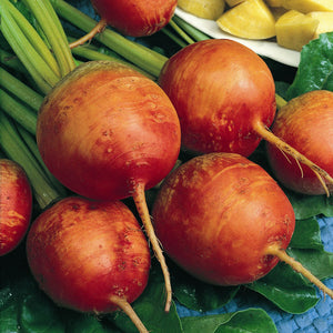 Organic Beet, Golden Detroit (1 oz)
