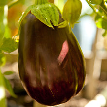 Load image into Gallery viewer, Organic Eggplant, Black Beauty (1 oz)
