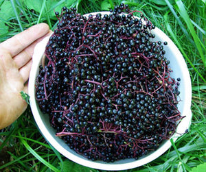 Strictly Medicinal Organic Black Elderberry
