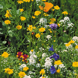 California Coastal Range Wildflower Mix (1/4 lb)