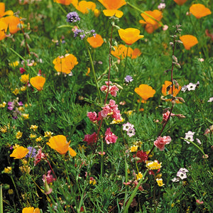 California Native Wildflower Mix (pack)