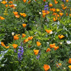 Deer Proof Garden Wildflower Mix (lb)