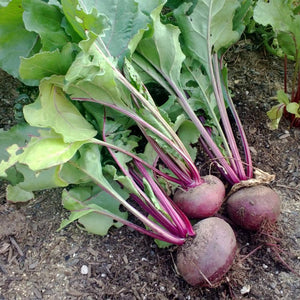Organic Beet, Detroit Dark Red (1/4 lb)