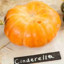 Load image into Gallery viewer, Organic Pumpkin, Cinderella (1 oz)