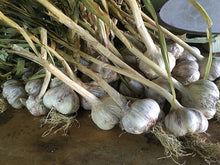 Load image into Gallery viewer, Organic Garlic, German Red (lb)