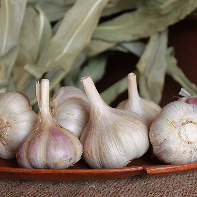 Organic Garlic, German Xtra Hardy Garlic (Lb)