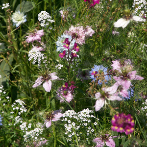 Fragrant Garden Wildflower Mix (pack)