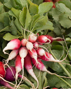 Organic Radish, French Breakfast