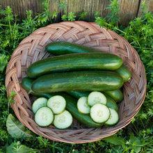 Load image into Gallery viewer, Organic Cucumber, Green Finger