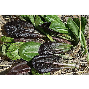 Organic Lettuce, Tricolored Romaine Mix