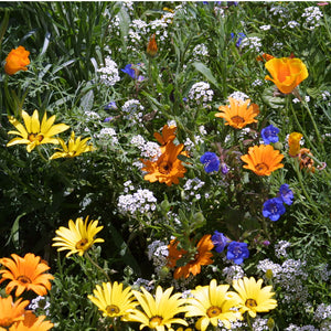 Low Growing Wildflower Mix (pack)
