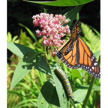 Load image into Gallery viewer, Peaceful Valley Save the Monarch Kit - Southeast (1/8 lb)