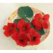 Load image into Gallery viewer, Renee's Garden Nasturtium Antique Empress Of India (Heirloom)