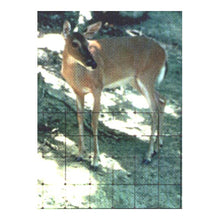 Load image into Gallery viewer, Deer Fencing (7.5'X 330')