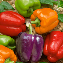 Load image into Gallery viewer, Organic Pepper, Rainbow Bell Mix