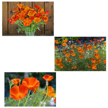 Load image into Gallery viewer, Renee's Garden California Poppy, Copper Pot