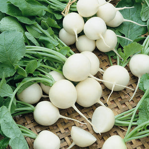 Organic Radish, White Beauty (1/4 lb)