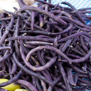 Organic Bean, Bush Royalty Purple Pod