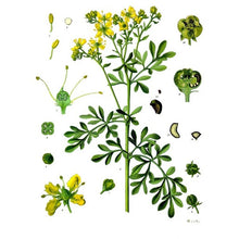 Load image into Gallery viewer, Strictly Medicinal Organic Rue