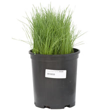 Load image into Gallery viewer, Organic Fescue, Tall (lb)