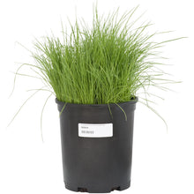 Load image into Gallery viewer, Linn Perennial Ryegrass Seed (Lb)