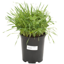 Load image into Gallery viewer, Peaceful Valley Sod Buster Mix - Seed (Lb)