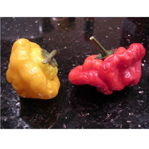 Organic Pepper, Red Scotch Bonnet